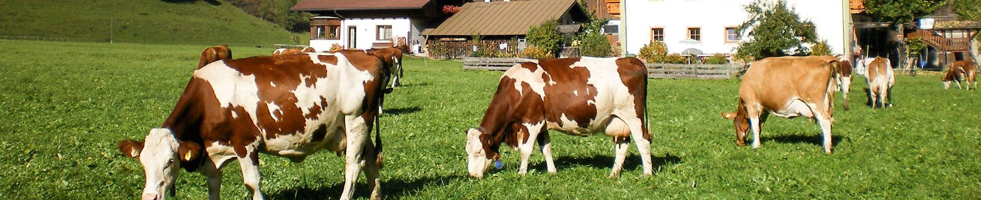 Tiere - Urlaub am Baubernhof in Bad Hofgastein