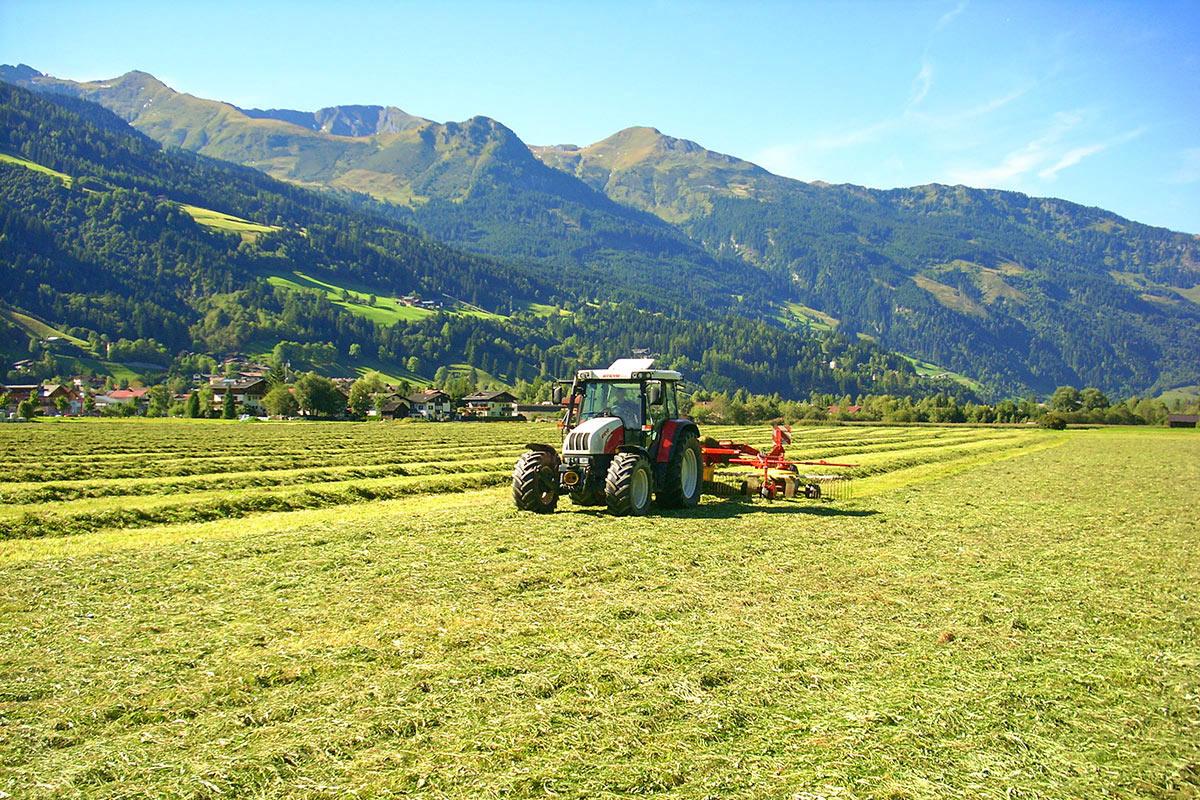 Landwirtschaft - Urlaub am Bio-Bauernhof in Bad Hofgastein