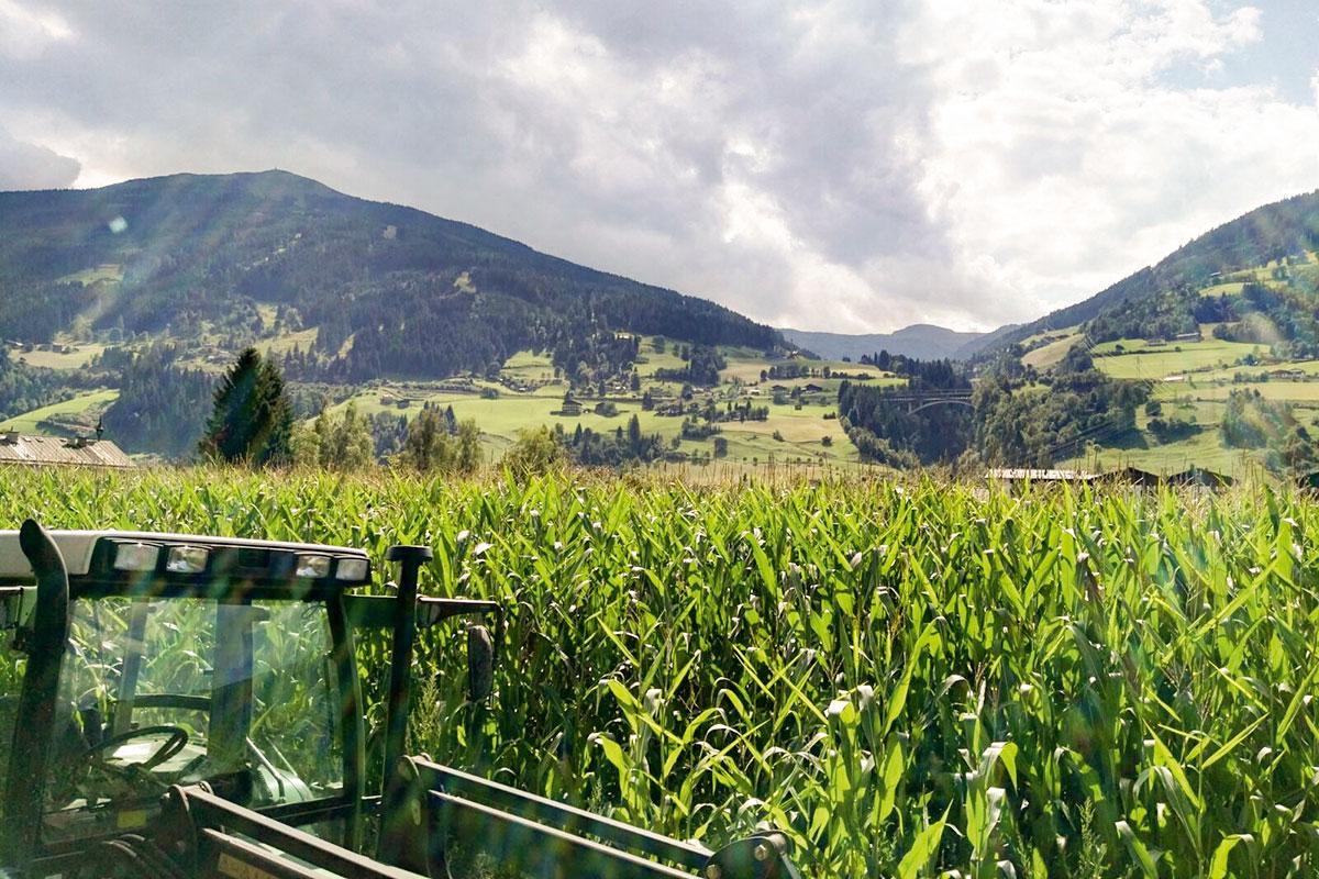 Arbeitsalltag am Bio-Bauernhof in Bad Hofgastein